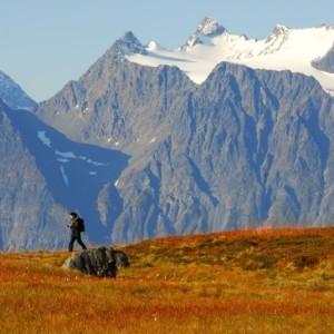 Expériences arctiques Laponie et archipel des îles du Svalbard 15