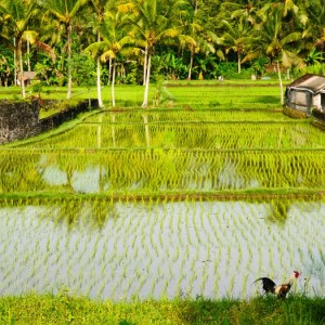 Villa Mathis Bali 42