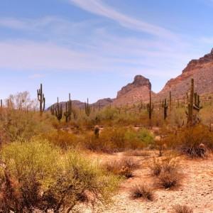USA Arizona ( Copyright  Paul B. Moore ) (2)