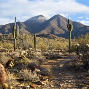USA Arizona ( Copyright  Tom Roche )