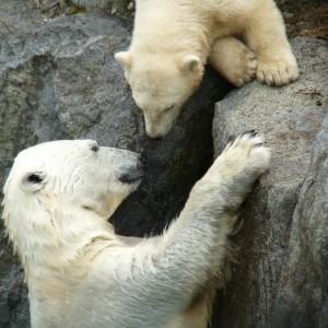 Zoo St Felicien_©TourismeSagLac