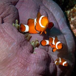 croisière îles de la sonde et Papouasie INDONESIE (1)