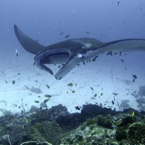croisière îles de la sonde et Papouasie INDONESIE (26)
