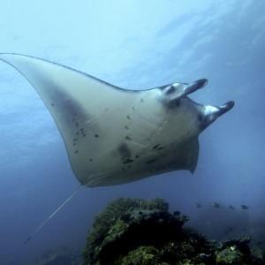 croisière îles de la sonde et Papouasie INDONESIE (27)