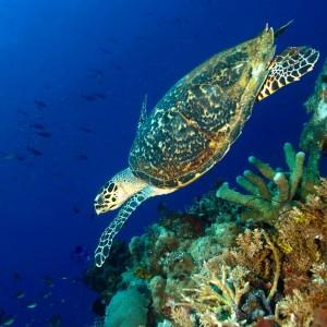 croisière îles de la sonde et Papouasie INDONESIE (28)