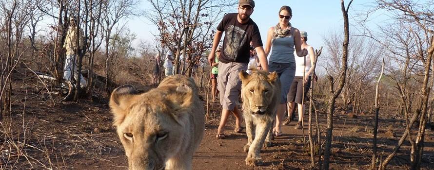 Safari pas comme les autres