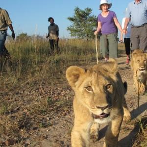 marche avec les lions (2)