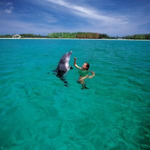Actdol02 Unexso GBI Grand Bahama island Copyright The Islands Of The Bahamas