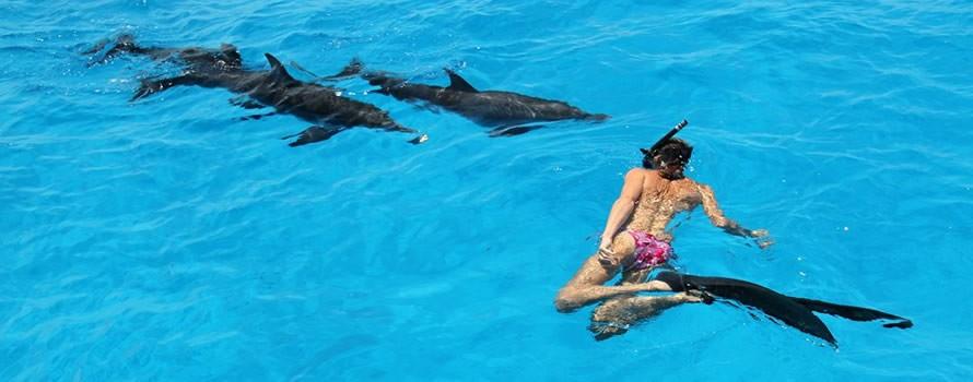 Adopte un dauphin