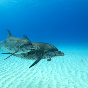 Bahamas-Tourism (19)d – copyright Atmoji – Wildquest