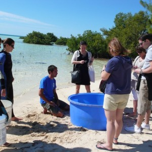 P1070173 – Bimini copyright The Islands Of The Bahamas